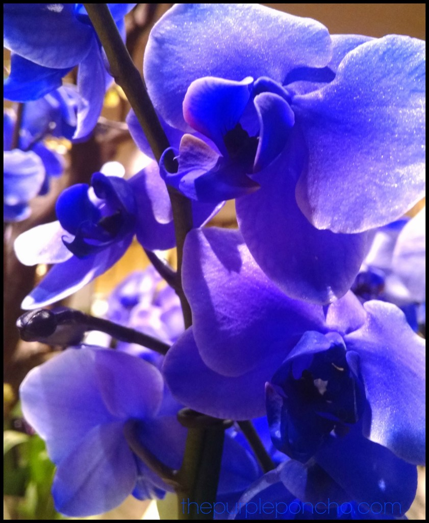 Purple Orchids by The Purple Poncho 2014