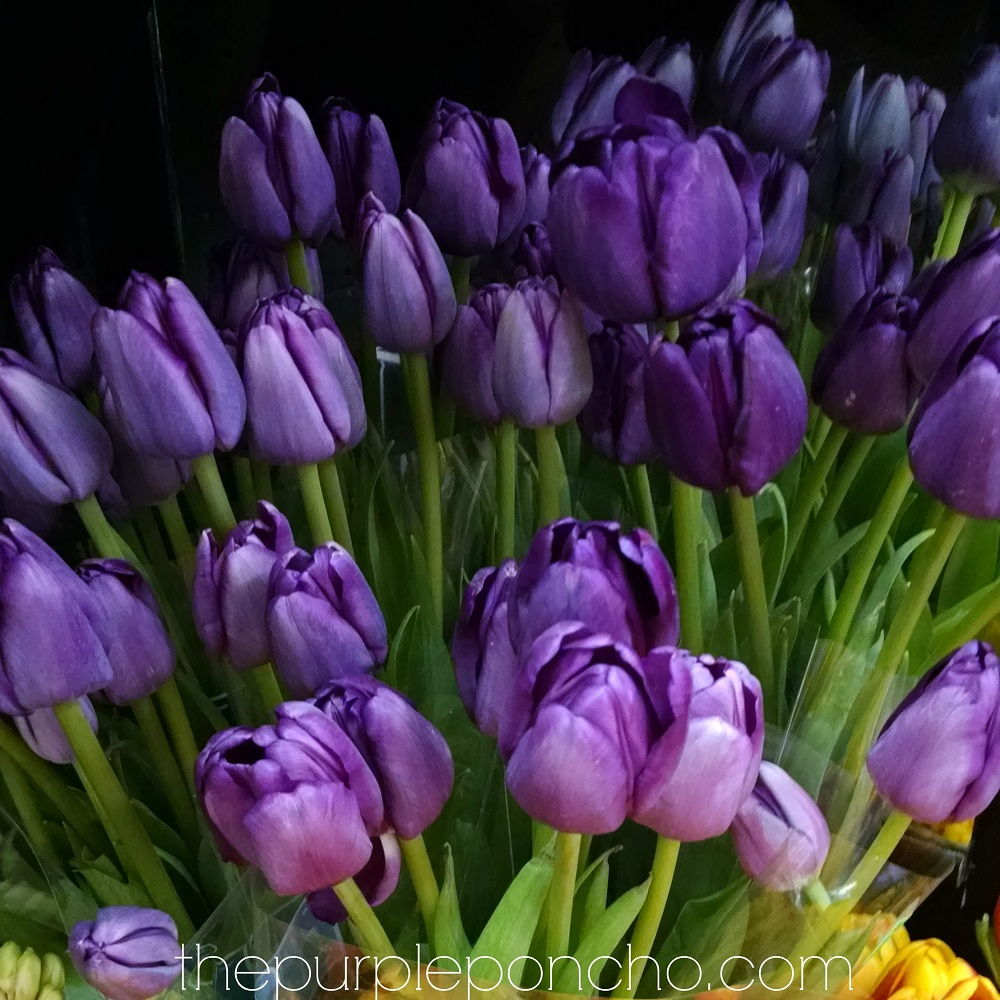 Today April Flowers: April Flowers Of The Month