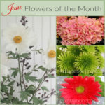 June Flowers Of The Month