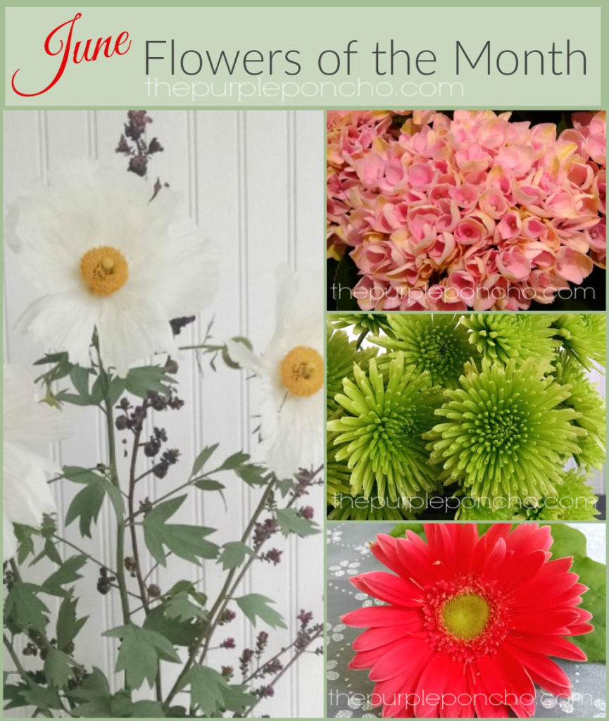 june flower of the month wwwimgkidcom the image kid